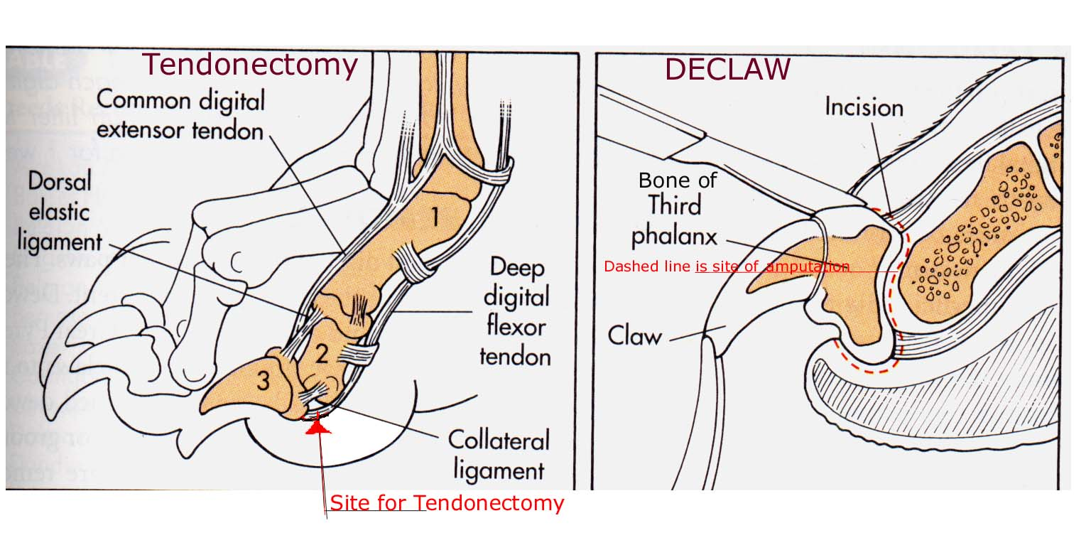 Tendonectomy-Declaw...diagrams